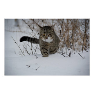winter cat poster