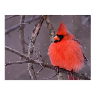 Winter Contemplation Postcard