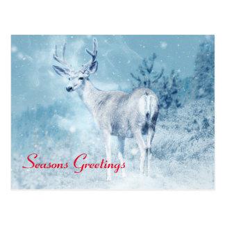 Winter Deer and Pine Trees Seasons Greetings Postcard