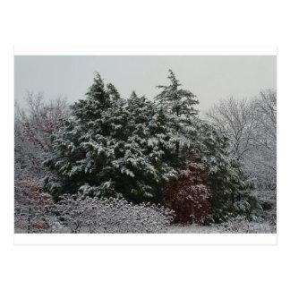 Winter Evergreen Postcard