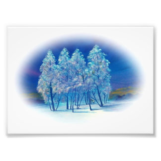Winter Fir Trees Abstract Forest Artwork Photo