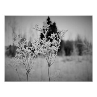 Winter Flower Black and White Poster