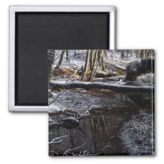 Winter Forest Brook Magnets