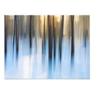 Winter Forest Art Photo