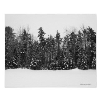 Winter forest trees covered in falling snow poster