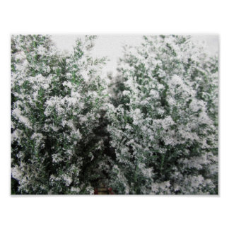 Winter Frost on Leaves Poster