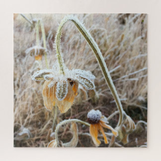 Winter Frost Wilted Rudbeckia Blooms Photograph Jigsaw Puzzle