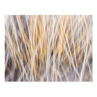 Winter grass abstract postcard