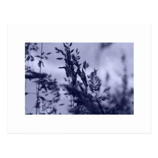 Winter Grass Postcard