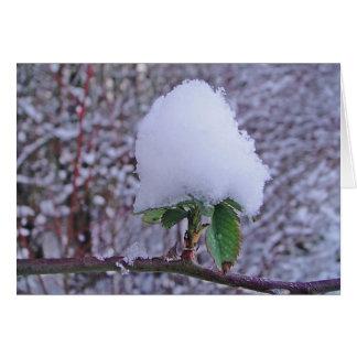 Winter greeting map pretty Schneeplfanze, in blank Greeting Card