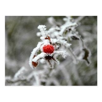 Winter has come postcard