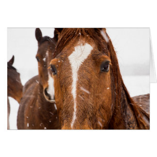 Winter Horse Wintry Wishes Holiday Card