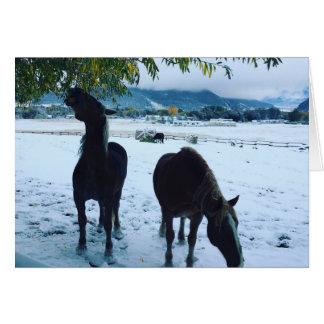 Winter horses card