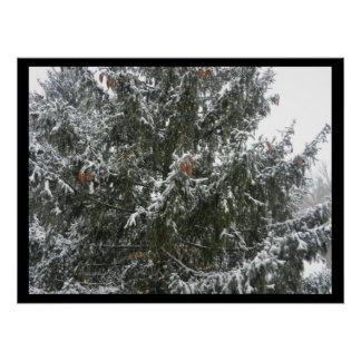 WINTER IN THE PINE TREE poster