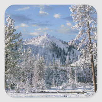 Winter in Yellowstone National Park, Wyoming Square Sticker
