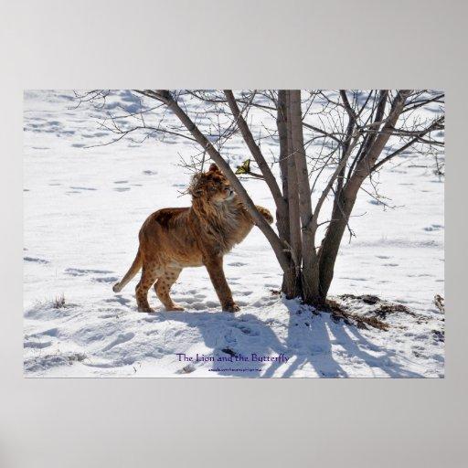 Winter Lion & Butterfly Wildlife Photo Print