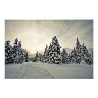Winter Magic Photo Print