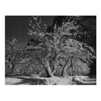 Winter Night Time Postcard