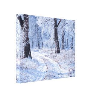 Winter Path Canvas Print