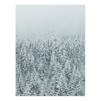 Winter Pines Postcard