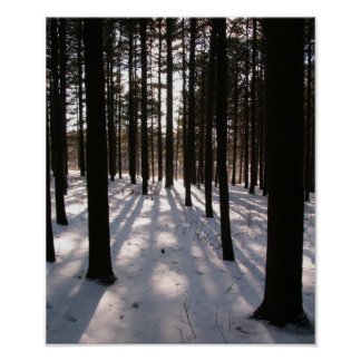 Winter Pines Poster