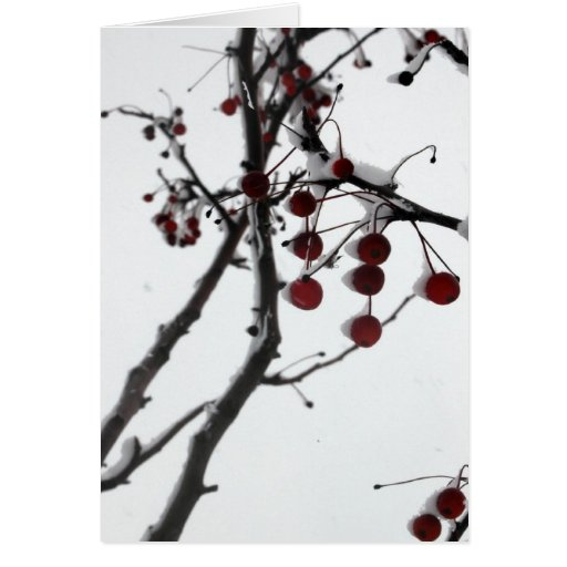 Winter Red Berries Cards