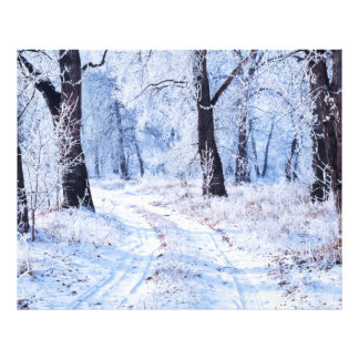 Winter Road Photo Print
