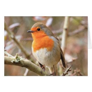Winter Robin Redbreast Greeting Card