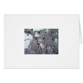 Winter Rose Hips Stationery Note Card