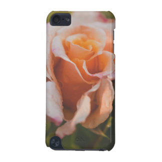 Winter rose iPod touch 5G cases