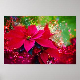 Winter rose, poinsettia/Christmas star festively Poster