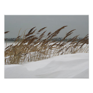 Winter Seashore Photo Print