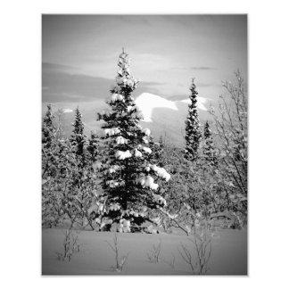 Winter Snow Art Photo