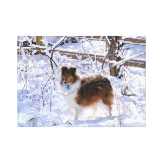 Winter Snow Collie Stretched Canvas Prints