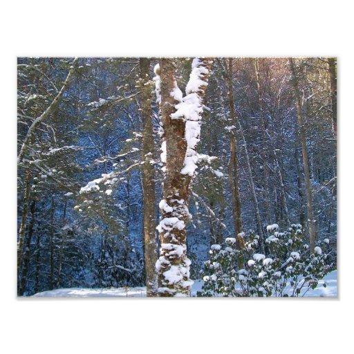 Winter Snow Photo