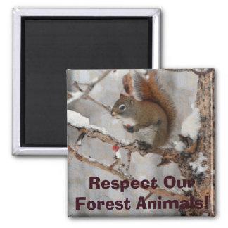 Winter Squirrel, Snow & Red Berries Xmas Design Square Magnet