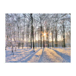 Winter sun in snowy forest canvas print