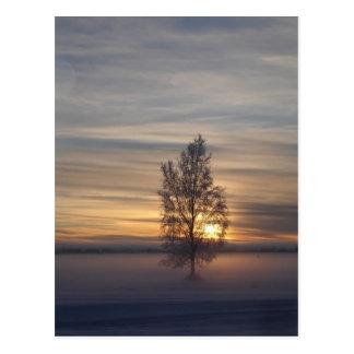 Winter sunset at Ft. Wainwright Postcard