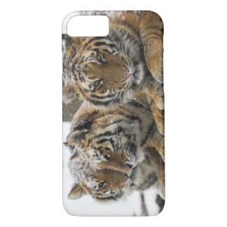 Winter Tigers iPhone 7 Case