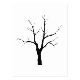 Winter Tree Black and White Set Postcard