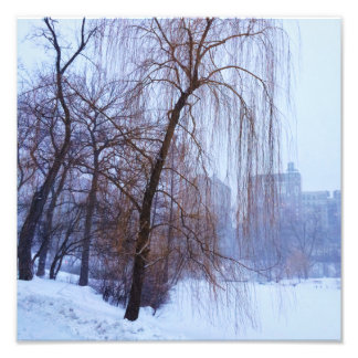 Winter Trees In Central Park Photo Print