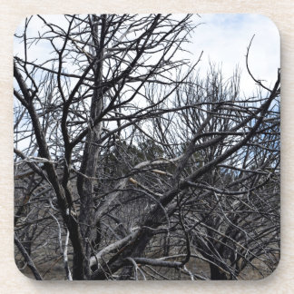 Winter Trees Photograph Coaster