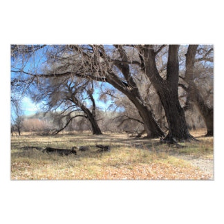 Winter Trees -Willow Lake Photo Print