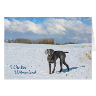 Winter Weimarland Greeting Card