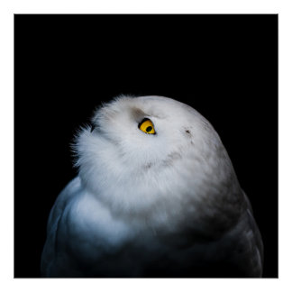 Winter White Snowy Owl Poster