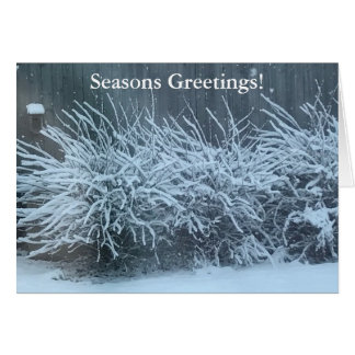 Winter Wisteria in the Snow Greeting Cards