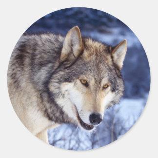 Winter Wolf 2 Round Sticker
