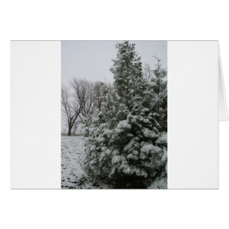 Winter Wonderland Pine Tree with Snow Fall Card