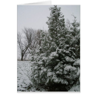 Winter Wonderland Pine Tree with Snow Fall Greeting Card