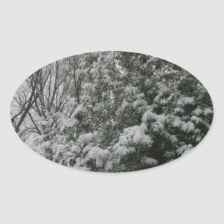 Winter Wonderland Pine Tree with Snow Fall Oval Sticker